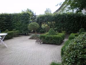vincent 2011 010